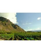 Dolina Calchaqui Argentyna - Regiony Winiarskie - Sklep z Winem Bachus