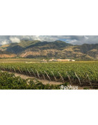 Cafayate Dolina Calchaqui Argentyna - Regiony Winiarskie - Sklep z Winem Bachus