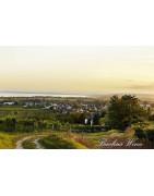 Neusiedlersee Wina Austriackie - Regiony Winiarskie - Sklep z Winem Bachus