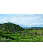 Wien Wina Austriackie - Regiony Winiarskie - Sklep z Winem Bachus