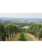 Carnuntum Wina Austriackie - Regiony Winiarskie - Sklep z Winem Bachus