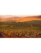 Sycylia - Regiony Winiarskie - Sklep z Winem Bachus