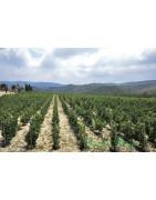 Libańska Dolina Bekaa - Regiony Winiarskie - Sklep z Winem Bachus