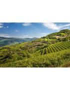 Soave - Regiony Winiarskie - Sklep z Winem Bachus