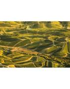Urugwaj Wina - Regiony Winiarskie - Sklep z Winem Bachus