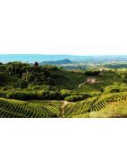 Wenecja Euganejska Veneto - Regiony Winiarskie - Sklep z Winem Bachus