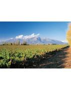 Argentyna - Regiony Winiarskie - Sklep z Winem Bachus