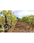 Calabria Kalabria - Regiony Winiarskie - Sklep z Winem Bachus