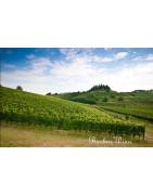 Friuli-Venezia Giulia - Regiony Winiarskie - Sklep z Winem Bachus