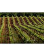 Algarve Wina Portugalskie - Regiony Winiarskie - Sklep z Winem Bachus