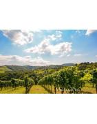 Bairrada Wina Portugalskie - Regiony Winiarskie - Sklep z Winem Bachus