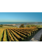 Colares Wina Portugalskie - Regiony Winiarskie - Sklep z Winem Bachus