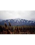 Uco Valley Uco Dolina Argentyna - Regiony Winiarskie - Sklep z Winem Bachus