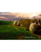 Wzgórza Trzebnickie - Regiony Winiarskie - Sklep z Winem Bachus