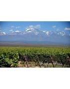 Lujan de Cuyo - Regiony Winiarskie - Sklep z Winem Bachus