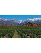 Cachapoal Valley Wine Chile - Regiony Winiarskie - Sklep z Winem Bachus