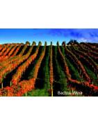 Hawkes Bay - Regiony Winiarskie - Sklep z Winem Bachus