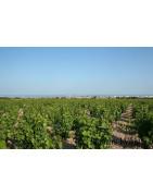 Langwedocja - Francja - Regiony Winiarskie - Sklep z Winem Bachus