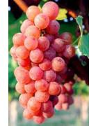 Sauvignon Gris - Szczepy Win - Sklep z Winem Bachus
