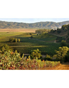 Curico Valley Chile - Regiony Winiarskie - Sklep z Winem Bachus