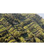 Liguria - Riwiera - Regiony Winiarskie - Sklep z Winem Bachus