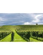 Lombardia - Franciacorta - Regiony Winiarskie - Sklep z Winem Bachus