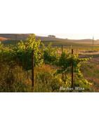 Lake County USA Wina - Regiony Winiarskie - Sklep z Winem Bachus