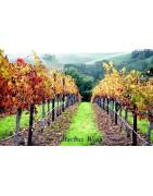 Monterey USA Wina - Regiony Winiarskie - Sklep z Winem Bachus