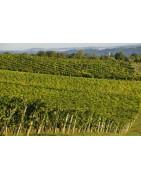 Côtes de Gascogne - Gaskonia - Regiony Winiarskie - Sklep z Winem Bachus
