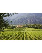Trentino Trydent - Regiony Winiarskie - Sklep z Winem Bachus