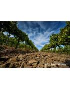 La Conca de Barbera Catalonia - Regiony Winiarskie - Sklep z Winem Bachus