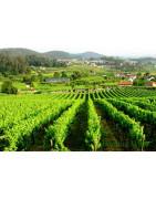 Vinho Verde - Regiony Winiarskie - Sklep z Winem Bachus