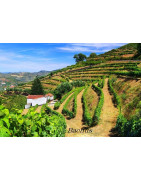 Minho Portugalia - Regiony Winiarskie - Sklep z Winem Bachus