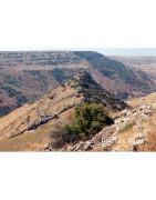 Wzgórza Golan Wina Izraelskie - Regiony Winiarskie - Sklep z Winem Bachus
