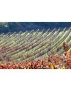 Izraelskie Wino - Regiony Winiarskie - Sklep z Winem Bachus