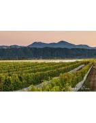 Gisborne Nowa Zelandia - Regiony Winiarskie - Sklep z Winem Bachus
