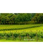 Auckland Nowa Zelandia - Regiony Winiarskie - Sklep z Winem Bachus
