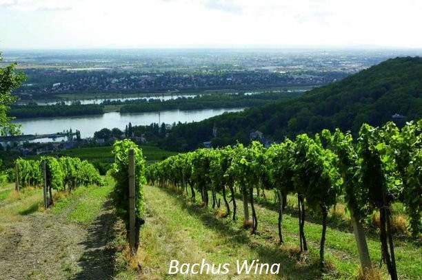 Weingut Mayer am Pfarrplatz Wina Austriackie