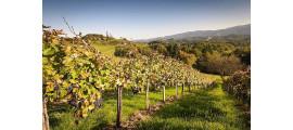 Weingut Schwarz wina Austriackie