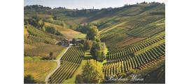 Ca'del Baio Langhe Piemont