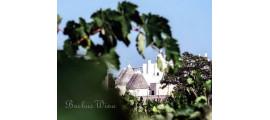Terrecarsiche1939 Wines Puglia