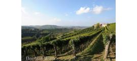 Dante Rivetti Piemont