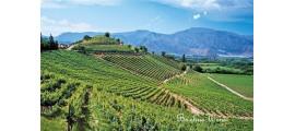 Vina Errazuriz Dolinie Aconcagua Chile