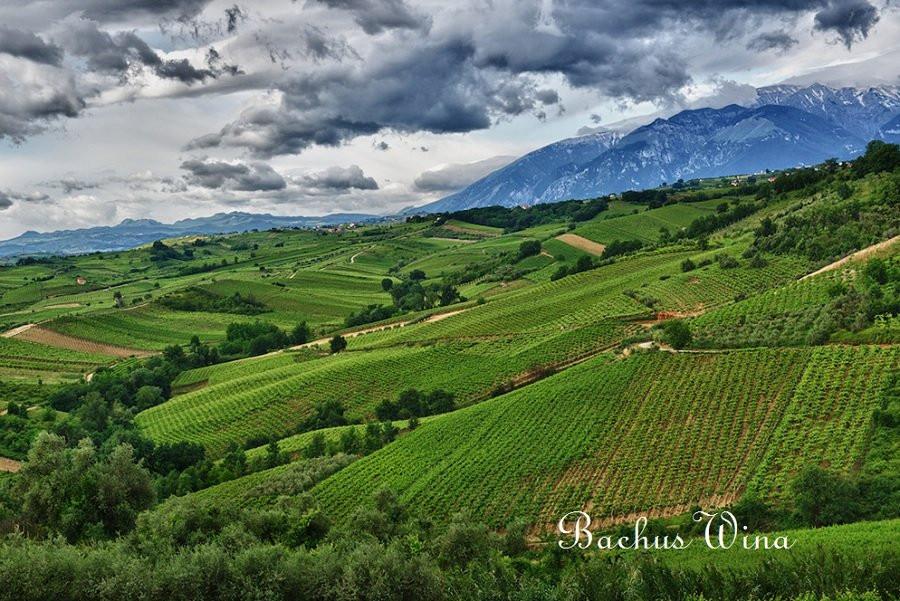 Tenuta Ulisse wina Abruzji