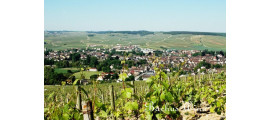 Domaine Vrignaud Burgogne