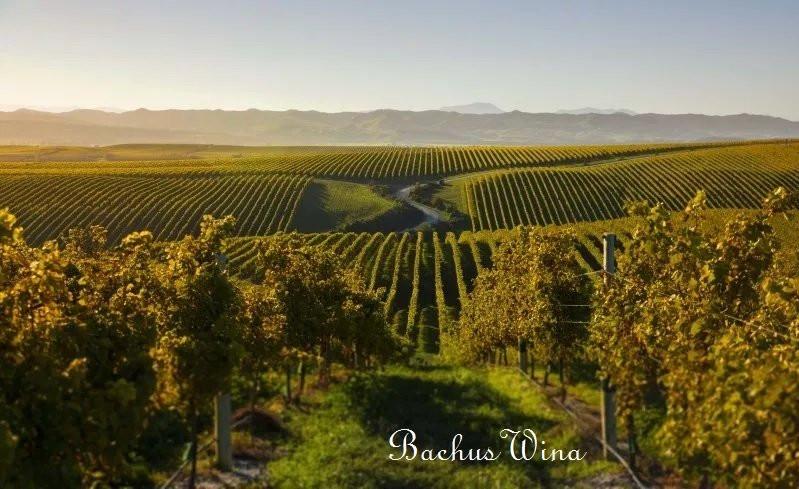 Tinpot Hut Wines Nev Zealand