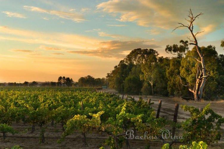 Mc Pherson wines z Australii