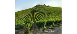 Montioni wina Umbria