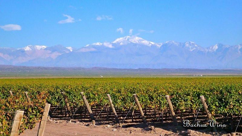 Terra Andina Chile Wina