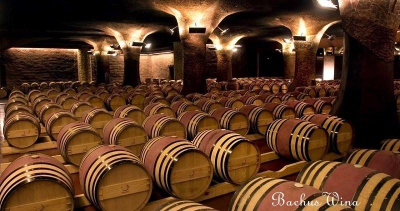 Vinedos Marchigue Santa Alexandra Chile